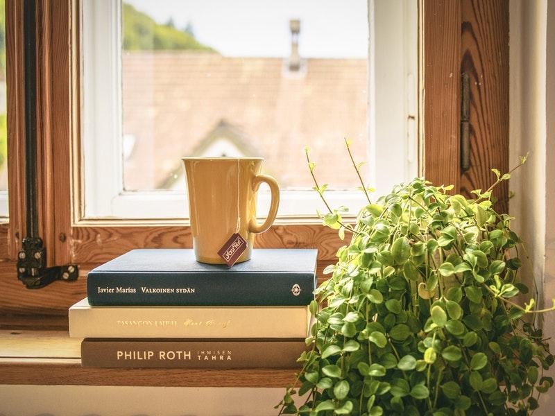 izbové rastliny na okne