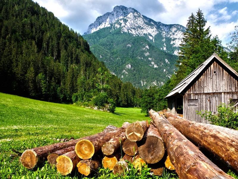 Samotná ťažba dreva nie je jediným dôvodom odlesňovania.