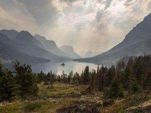 5 spôsobov, ako zastaviť odlesňovanie