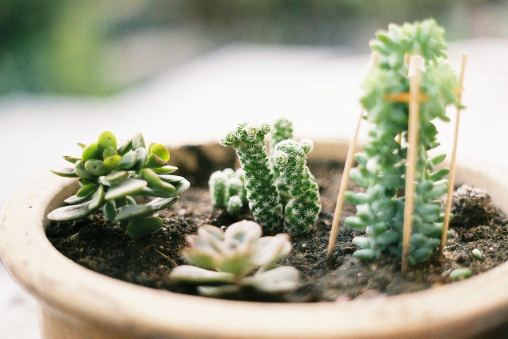 diy záhradka so sukulentmi