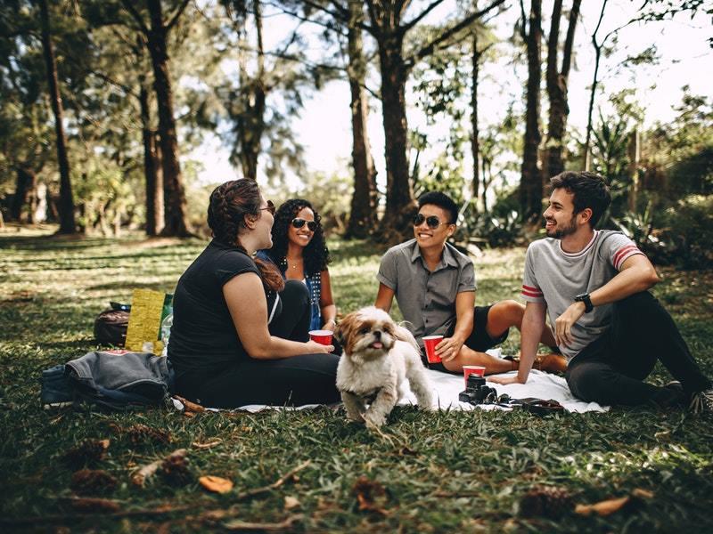 piknik v prírode
