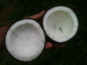 kokosovy olej je fajn