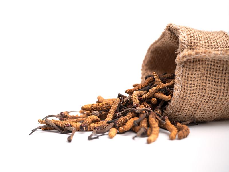 Spoznajte účinky zázračnej huby Cordyceps